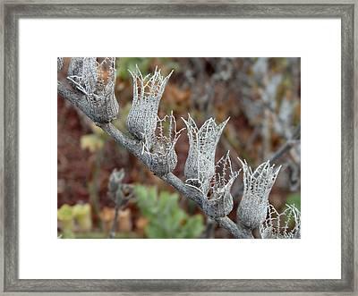 Witches Brew 5 - Hyoscyamus Albus Framed Print