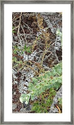Witches Brew 6 - Hyoscyamus Albus Framed Print