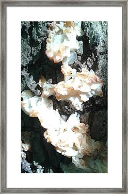 Witches Butter Framed Print by Christina Heyworth