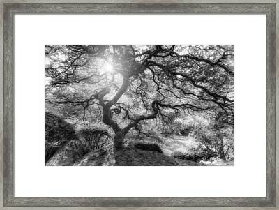 Witches Light Framed Print by Darren  White