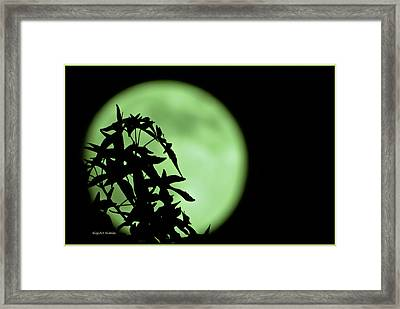 Framed Print featuring the photograph Witching Hour by DigiArt Diaries by Vicky B Fuller