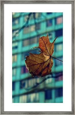 With A View Framed Print by Jhoy E Meade