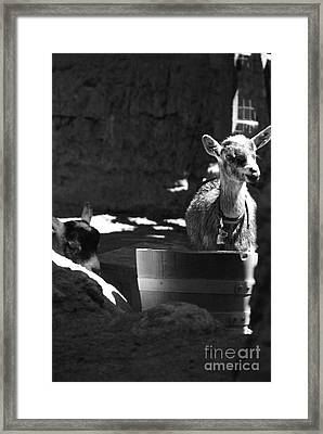 With Bells On - Bw Framed Print by Linda Shafer