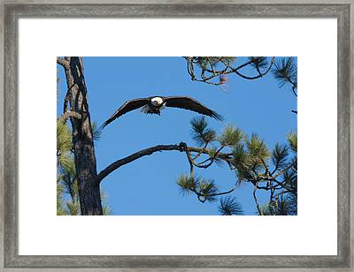 With Catch Framed Print