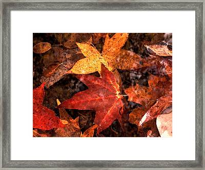 With Love - Autumn Pond Framed Print by Theresa  Asher