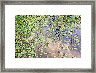 With My Camouflage I Would Be Unnoticed Framed Print by Asbed Iskedjian