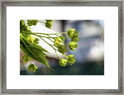 With The Breeze - Framed Print