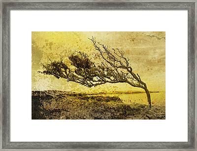 With The Flow Framed Print by Gareth Davies