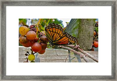 With The Grape Framed Print by PJ  Cloud