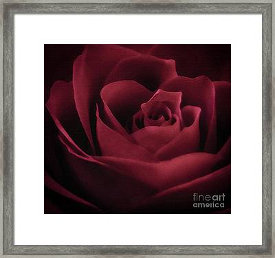 With This Rose Framed Print