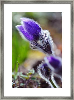 With Touch Of Sun Framed Print by Jenny Rainbow