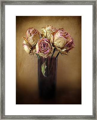 Withered Beauty Framed Print by Jessica Jenney