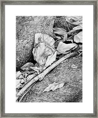 Framed Print featuring the drawing Withered Leaves by Aaron Spong