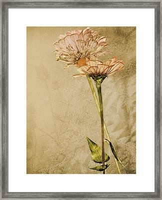 Withered Framed Print by Sally Engdahl