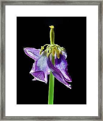 Withering Beauty Framed Print