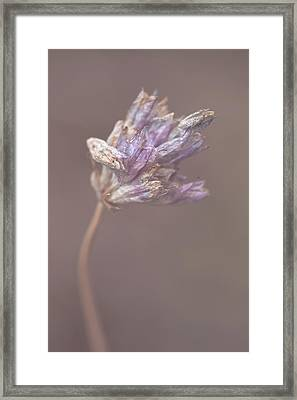 Framed Print featuring the photograph Withering Purplehead by Alexander Kunz