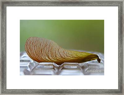 Within Lies A Tree Framed Print by Nina Silver