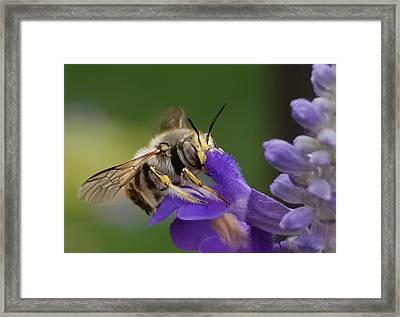 Without Me  Framed Print