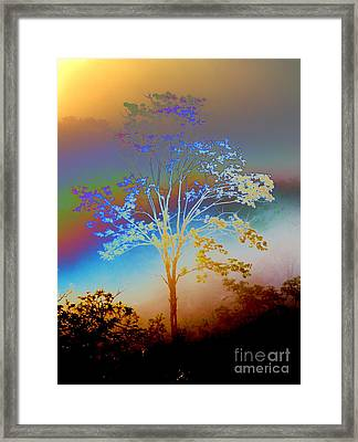 Framed Print featuring the photograph Witness Tree by Jesse Ciazza