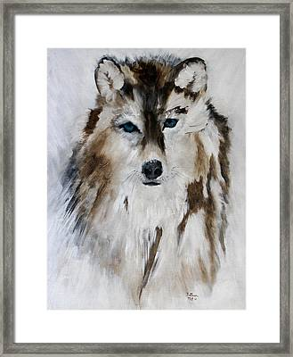 Wolf - Blue Star Framed Print