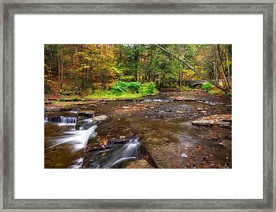 Wolf Creek 2 Framed Print by Mark Papke