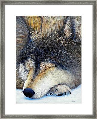 Wolf Dreams Framed Print by Brian  Commerford