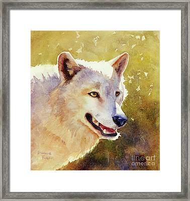 Wolf In Morning Light Framed Print