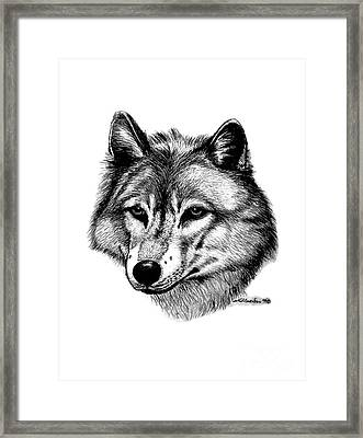 Wolf In Pencil Framed Print