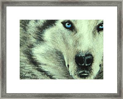 Wolf Framed Print by Lena Day