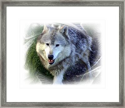 Wolf Framed Print by Marty Koch