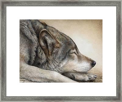 Wolf Nap Framed Print