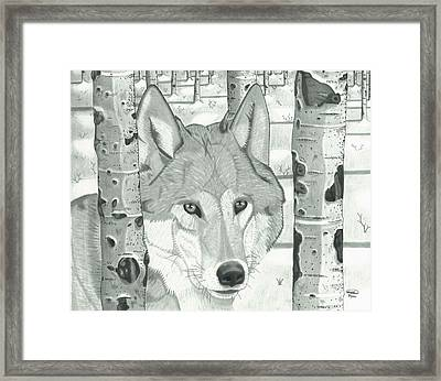 Wolf Solo Framed Print by Matthew Moore
