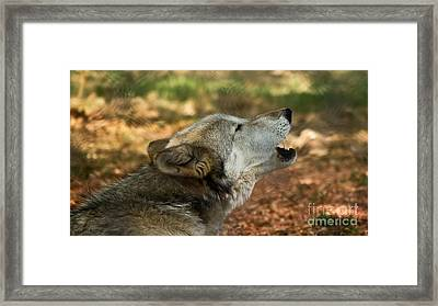 Wolf Song Framed Print by Julie Clements
