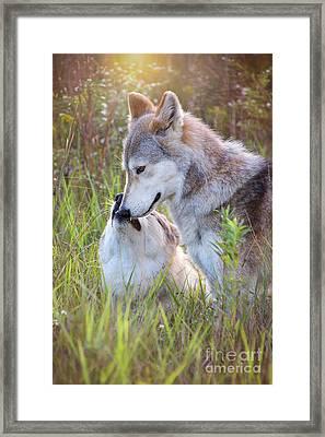 Wolf Soul Mates Framed Print