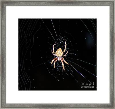 Wolf Spider Back View Framed Print