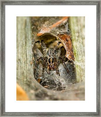Wolf Spider Lair Framed Print