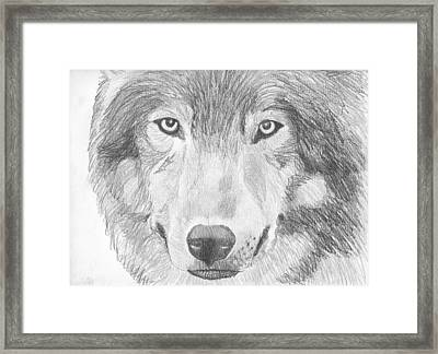 Wolf Wildlife Portrait Original Sketch By Pigatopia Framed Print by Shannon Ivins