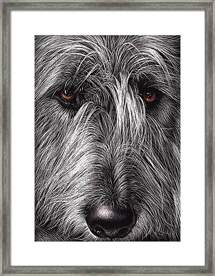 Wolfhound Framed Print
