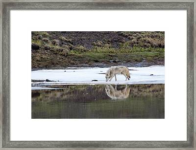 Wolflection Framed Print