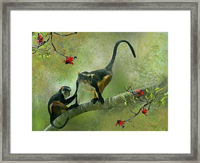 Wolf's Guenon Framed Print by Thanh Thuy Nguyen