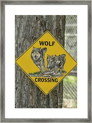 Wolves Crossing Framed Print by Patricia Hofmeester