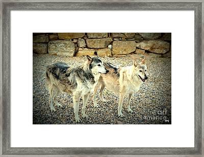 wolves XI Framed Print