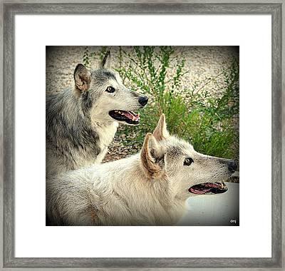 wolves XV Framed Print