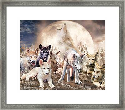 Wolves - Young And Wild Framed Print by Carol Cavalaris