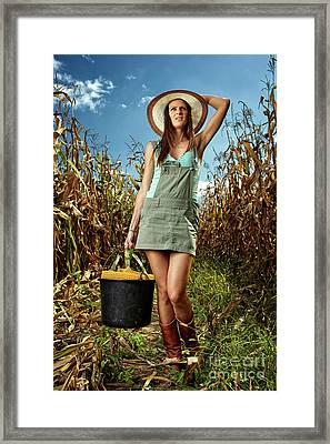 Woman Farmer Carrying A Bucket Of Corn Cobs Framed Print