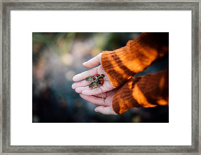 Woman Hands Holding Cranberries Framed Print by Aldona Pivoriene