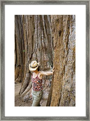 Woman Leaning On Giant Sequoia Tree Framed Print by Dawn Kish