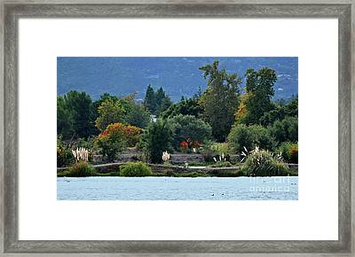 Woman Resting By A Lake Framed Print