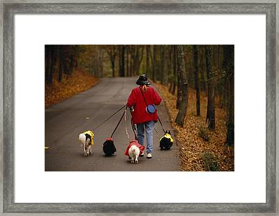 Woman Walks Her Army Of Dogs Dressed Framed Print