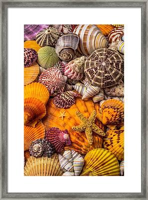 Womderful Seashells Framed Print by Garry Gay